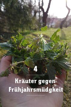 Diese 4 Kräuter sind ein gutes Hausmittel gegen die Frühjahrsmüdigkeit, probiert es aus! Wilder Kaiser, Kraut, Blog, Plants, Home Remedies, Ad Home, Blogging, Plant, Planets