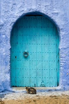 Cat and blue door - Marrocos Cool Doors, Unique Doors, Door Knockers, Door Knobs, Moroccan Doors, Do It Yourself Design, When One Door Closes, Coastal Style, Closed Doors