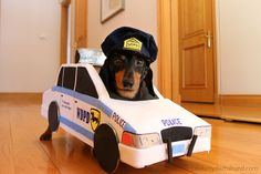 Here are ten dog costumes that are ideal for Dachshunds! Here are ten dog costumes that are ideal for Dachshunds! Dog Halloween Costumes, Pet Costumes, Funny Halloween, Halloween 2020, Dachshund Costume, Crusoe The Celebrity Dachshund, Cops And Robbers, Police, Dog Car