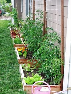 Do this along back wall of garage. Perfect herb container garden!! May work for lettuce and cool plants behind us this might be an idea for the east side of the house