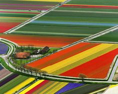Another beautiful one :) Tulip fields of Holland