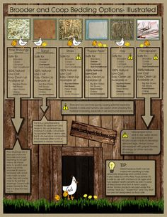 Quick Guide to Common Brooder and Coop Bedding Materials - BackYard Chickens Community