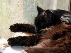 soft and beautiful - black cat awareness day oct 27
