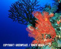 Save the Great Barrier Reef from Surging Coal Exports - The Petition Site