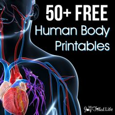 Be sure to enter the BIG GIVEAWAY at the end of this post! This past year we learned about the human body.  Human anatomy & physiology is one of my favorite science topics to teach, and learn about (I guess that's why I was a nurse in my former life). There are so many great …