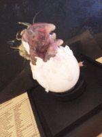 zombie chick by ikkyarts