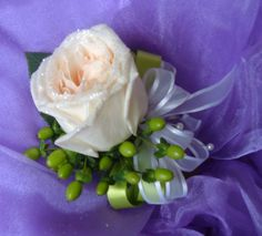 Garden rose with hypericum berries accented with sheer ribbon