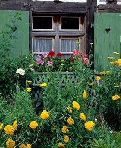 Cottage with windowbox, Achillea in foreground