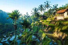 Bali Tipps Ubud