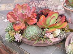succulents: low saucer