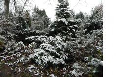 Občanské sdružení přátel pietního parku Draháň - Fotoalbum - Fotogalerie - ...zima přichází (2016) - 2 Snow, Park, Outdoor, Pictures, Photograph Album, Outdoors, Parks, Outdoor Games, The Great Outdoors
