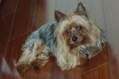 Wally!!