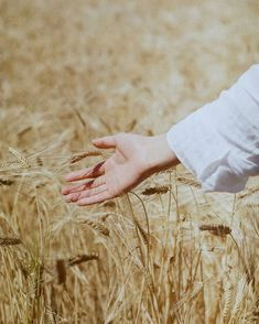 Hand Photography, Portrait Photography, Fields Of Gold, Wheat Fields, Shades Of Beige, Human Art, Felder, Greek Gods, Aesthetic Pictures