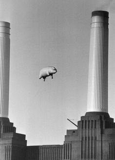 """A long inflatable pig suspended between two of the chimneys at Battersea Power Station, London, during a photoshoot for the cover of Pink Floyd's album """"Animals"""", November (Retro. Futuristic Architecture, Architecture Art, Imagenes Pink Floyd, Arte Pink Floyd, Photos Vintage, Richard Williams, Hayley Williams, Battersea Power Station, Rock Poster"""