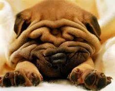 Resultado de imagem para cachorros fofos