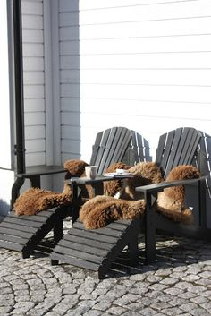 Covered winter terrace, snow all around, Vitamin D tank up and cuddly warm furs !