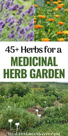 Thinking of starting a medicinal herb garden or adding medicinal plants to your existing garden? Check out this info on selecting medicinal plants, with more than 45 to choose from. #medicinalplants #herbalism #garden #herbgarden #plantmedicine Planting Plan, California Poppy, Gardening Tips, Kitchen Gardening, Natural Garden, Garden Inspiration, Garden Ideas, Outdoor Landscaping, Medicinal Plants