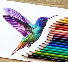 Pin by brooklyn on art hummingbird drawing, hummingbird tattoo, color penci Hummingbird Illustration, Hummingbird Drawing, Colorful Hummingbird Tattoo, Hummingbird Tattoo Watercolor, Animal Drawings, Cool Drawings, Colorful Drawings, Color Pencil Drawings, Pencil Colour Painting