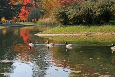 Lake Marian at Saint Mary's College (and of course the Canadian geese that always chased me away if I got too close!)
