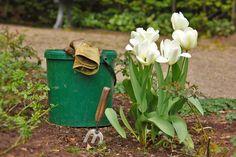 Framed Art For Your Wall Garden Tulips Plant Garden Tools Bucket Gardening Frame Garden Guide, Diy Garden, Garden Projects, Garden Tools, Garden Gear, Dream Garden, Garden Weeds, Indoor Garden, Gardening Magazines