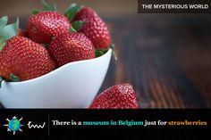 #travel #belgium #facts