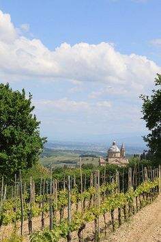 Vineyards in Montepulciano, a medieval and Renaissance hill town and comune in the Italian province of Siena in southern Tuscany.