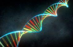 Google Genomics es una base de datos para almacenar, procesar, explorar y compartir la lectura de secuencias de ADN. - MIJO! BRANDS