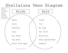 Stellaluna venn diagram lesson stellaluna venn diagrams and diagram comparing bats and stellaluna stellaluna venn diagram ccuart Gallery