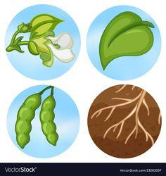 Watercolor Plants, Watercolor Leaves, Tropical Leaves, Tropical Plants, Green Leaf Background, Parts Of A Plant, Plant Shelves, Green Trees, Plant Decor