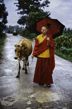 If anybody wants me, I'll be walking the cow. Tibet Steve McCurry