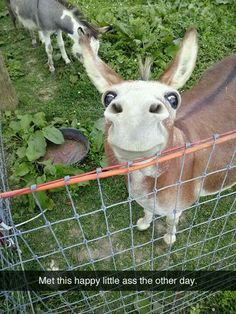 Funny Pictures Of The Day - 49 Pics-->aww look at him! He's so cute! Such an adorable little donkey Funny Animal Pictures, Cute Funny Animals, Funny Cute, Hilarious, Funniest Animals, Funny Happy, Super Funny, Funny Pics, Farm Animals
