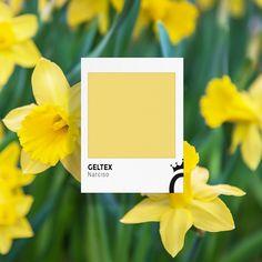 Un elemento característico como ningún otro de la primavera son las flores. ¿Sabías que hay una de ellas que se llama Narciso y es así de espectacular en su color amarillo? 🌼 Place Cards, Polaroid Film, Place Card Holders, Texture, Yellow, Spring, Colors, Patterns