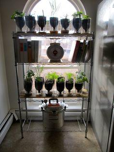 The Self Watering Culinary Herb Garden Garden Oasis, Herb Garden, Garden Plants, Home And Garden, Growing Herbs Indoors, Growing Greens, Culinary Herb, Organic Gardening, Indoor Gardening
