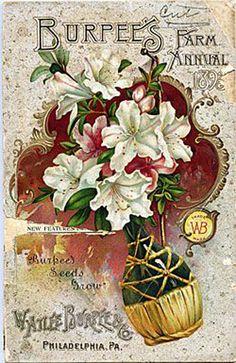 Vintage Floral Graphics