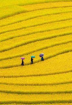 Yellow fields in Vietnam Beautiful World, Beautiful Places, Landscape Photography, Art Photography, Yellow Photography, Photography Lighting, Yellow Fields, Foto Poster, Foto Blog