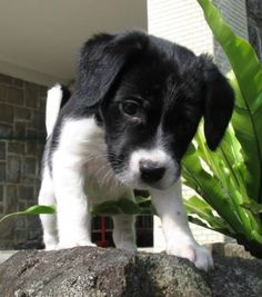 50 Cute Mixed Breed Dogs You Need to Know About | slice.ca