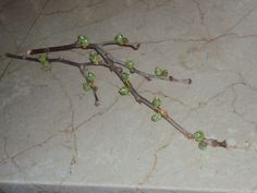 Branches with beads