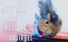 Daily Cute: Rescued Squirrel Loves Her New Home