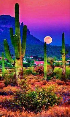"travelandseetheworld: ""Sunset in the beautiful Sonoran Desert near Chandler, Arizona - photography by Saija Lehtonen "" Beautiful Sunset, Beautiful World, Beautiful Places, Amazing Places, Places To Travel, Places To Visit, Travel Destinations, Belle Photo, Amazing Nature"