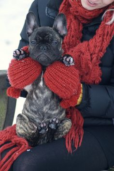 Awe!  This looks like someone I know....now I wanna make my fur nephew a red sweater!