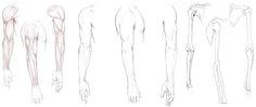 Arm Anatomy Resource