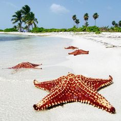 To visit Starfish point....Caymans.