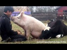 Love Without Limits: Adorable Rescues Snuggle Their Caretaker - ChooseVeg.com