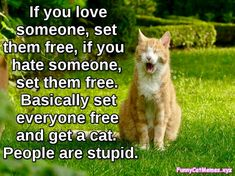 Funny Cats Acting Like Humans Compilation 2015 - Funny Cat Quotes Animals And Pets, Funny Animals, Cute Animals, Funny Horses, Funny Cat Memes, Funny Cats, Cats Humor, Hilarious, Funny Humor