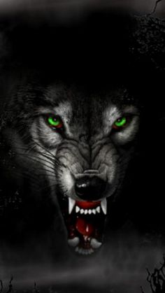 fondo-de-lobo-30