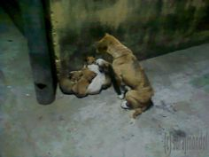 dog with 9 son