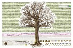 Great infographic for World Wildlife Foundation. Tree with all components of life removed.