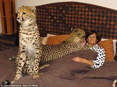 pet cheetah attack - Google Search
