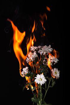 Fire flowers on Wacom Gallery - - Burning Flowers, Breathing Fire, Fire Photography, Fire Flower, Fire Element, Orange Aesthetic, Pretty Flowers, Cute Wallpapers, Aesthetic Wallpapers