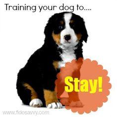 Training your dog to 'stay' can help keep him safe, and make life easier.  See the simple steps to teaching the 'stay' command here.